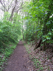 The 'forest' path between Hoeilaart station and UDS hotel Dolce la Hulpe